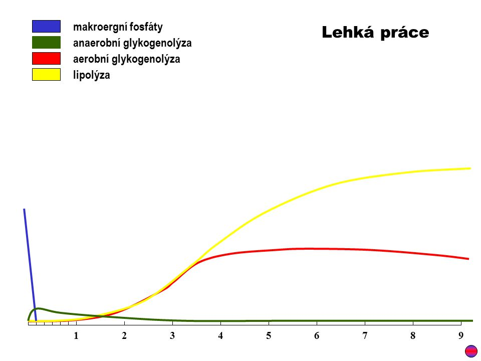 Lehká práce makroergní fosfáty anaerobní glykogenolýza