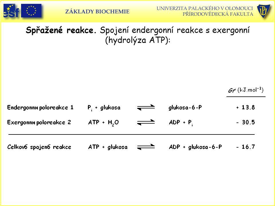 Spřažené reakce. Spojení endergonní reakce s exergonní (hydrolýza ATP):