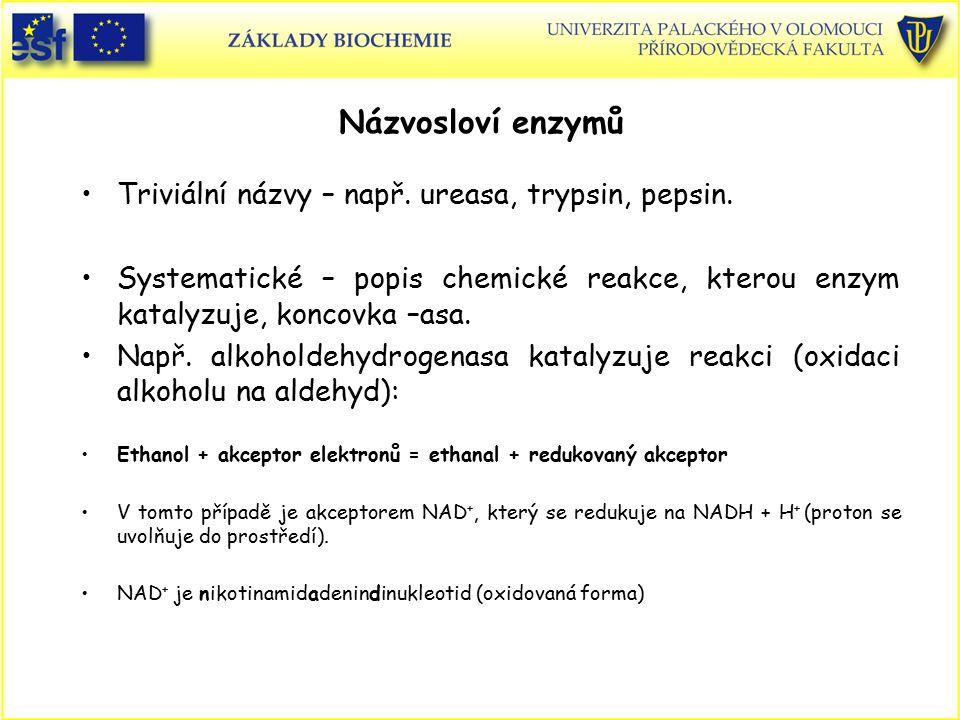 Názvosloví enzymů Triviální názvy – např. ureasa, trypsin, pepsin.