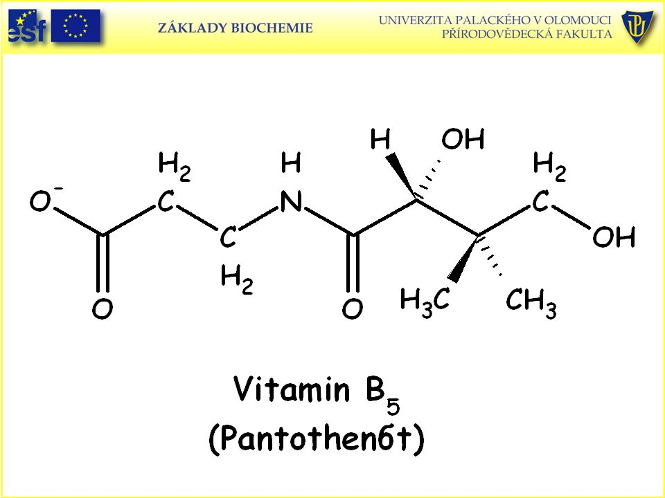 Vitamin B5 (pantothenát)
