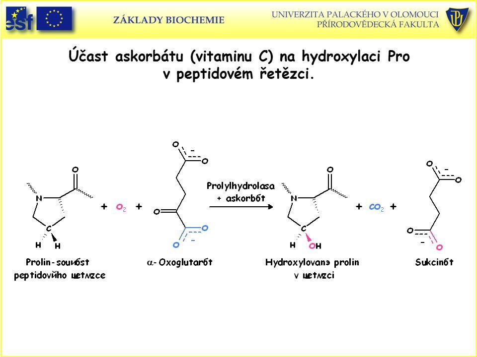 Účast askorbátu (vitaminu C) na hydroxylaci Pro v peptidovém řetězci.