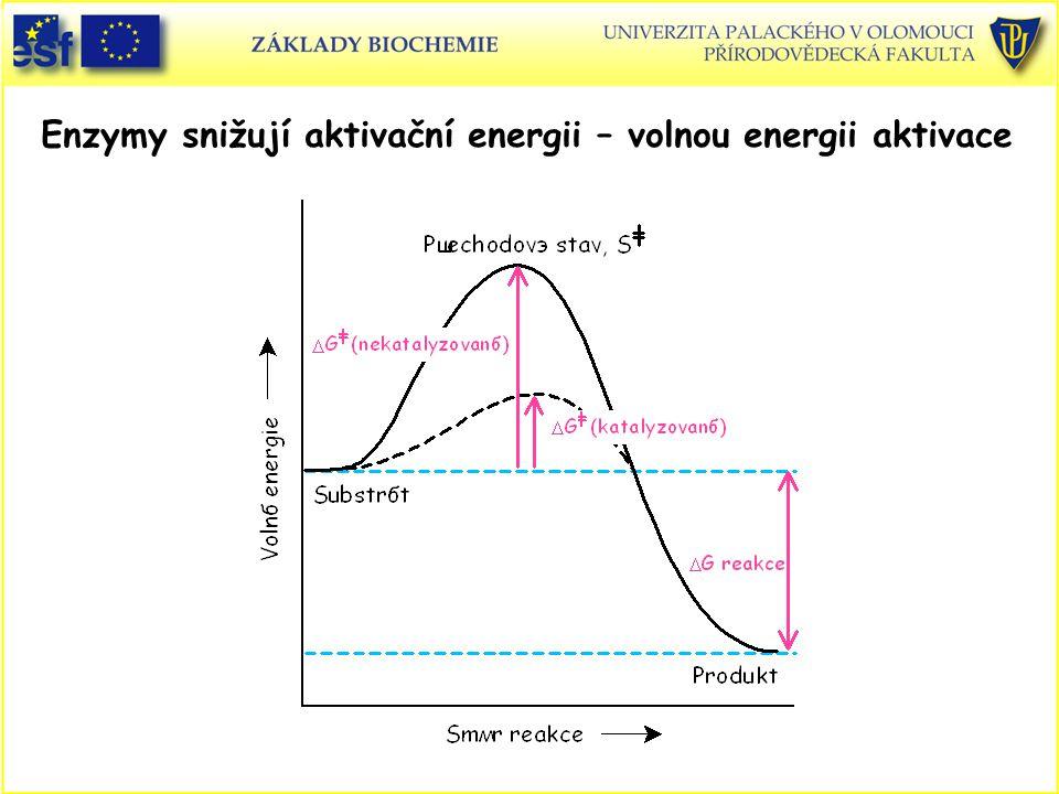 Enzymy snižují aktivační energii – volnou energii aktivace
