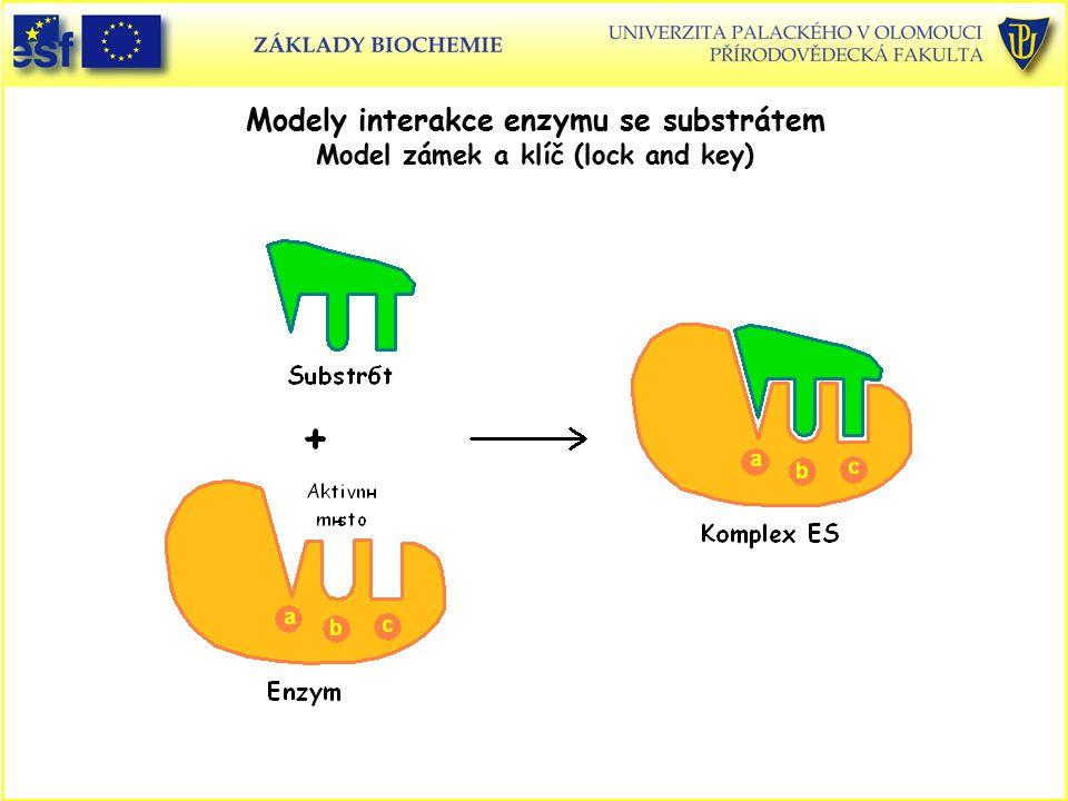 Modely interakce enzymu se substrátem Model zámek a klíč (lock and key)
