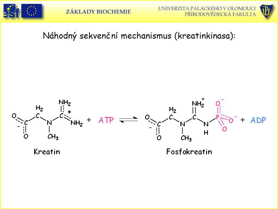 Náhodný sekvenční mechanismus (kreatinkinasa):