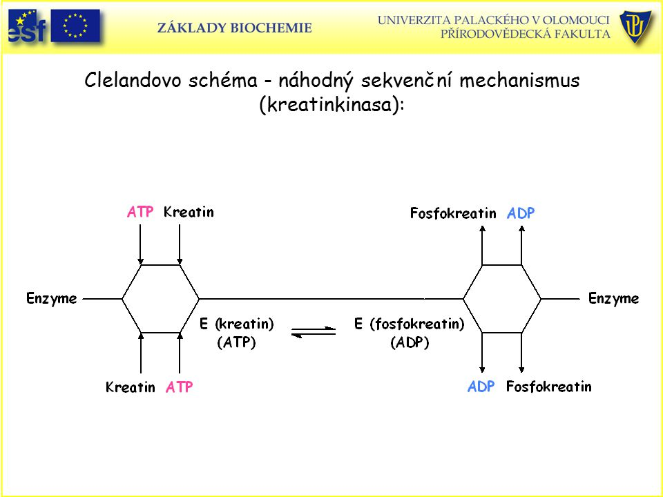 Clelandovo schéma - náhodný sekvenční mechanismus (kreatinkinasa):