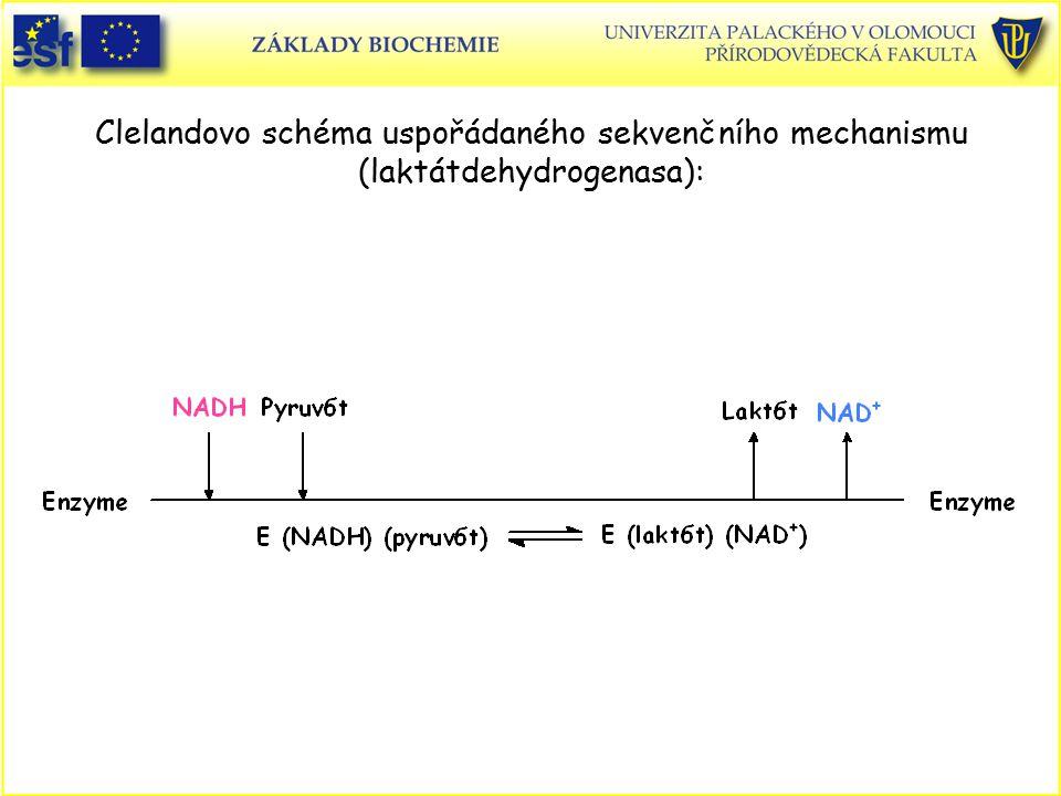 Clelandovo schéma uspořádaného sekvenčního mechanismu (laktátdehydrogenasa):