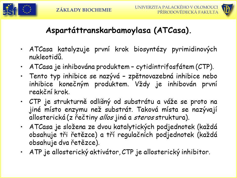 Aspartáttranskarbamoylasa (ATCasa).
