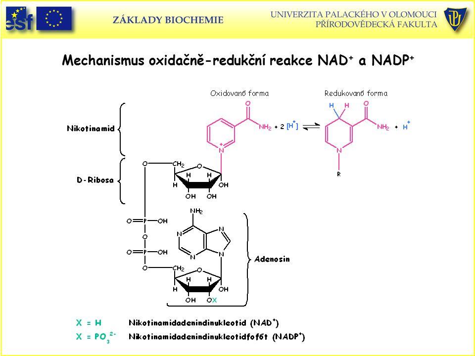 Mechanismus oxidačně-redukční reakce NAD+ a NADP+