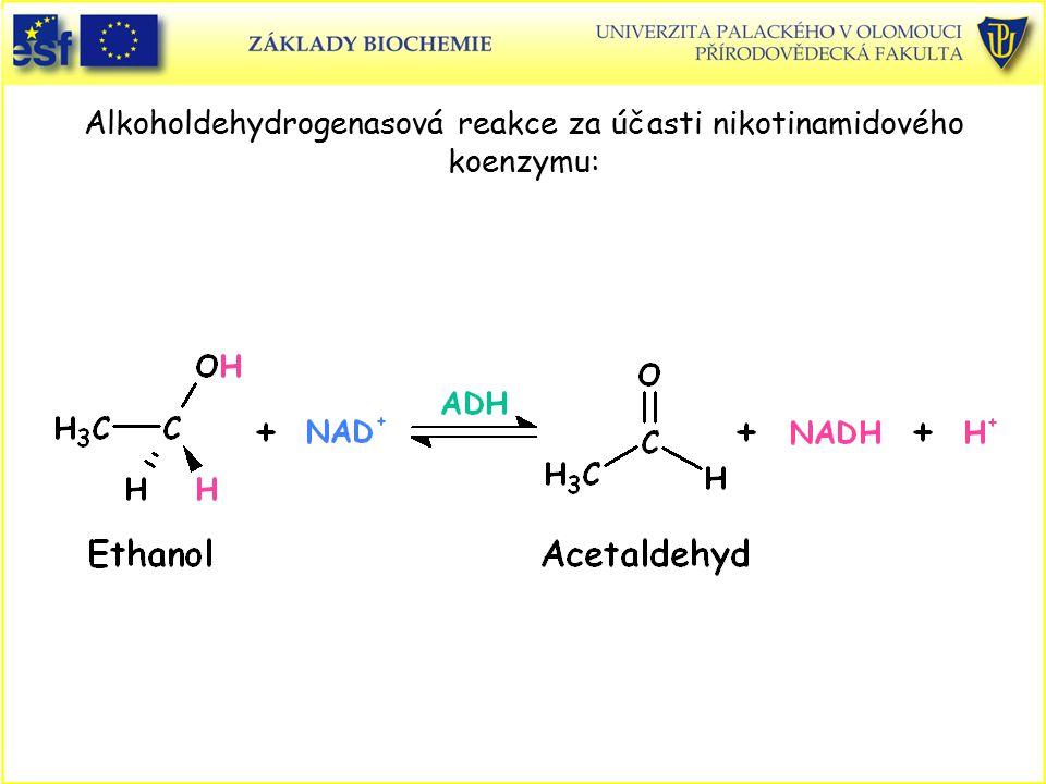Alkoholdehydrogenasová reakce za účasti nikotinamidového koenzymu: