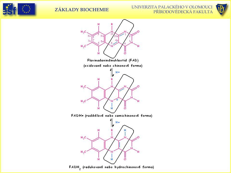 Oxidačně-redukční reakce FAD a FADH2