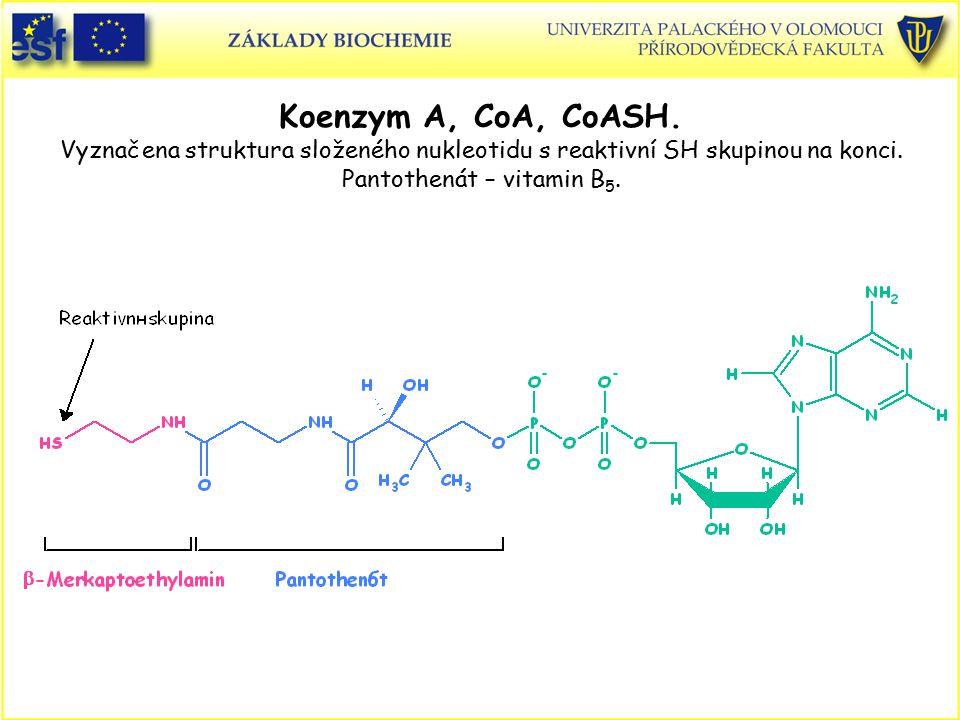 Koenzym A, CoA, CoASH. Vyznačena struktura složeného nukleotidu s reaktivní SH skupinou na konci. Pantothenát – vitamin B5.