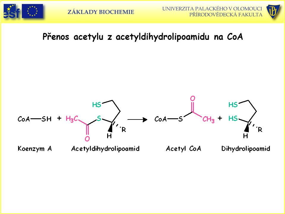 Přenos acetylu z acetyldihydrolipoamidu na CoA