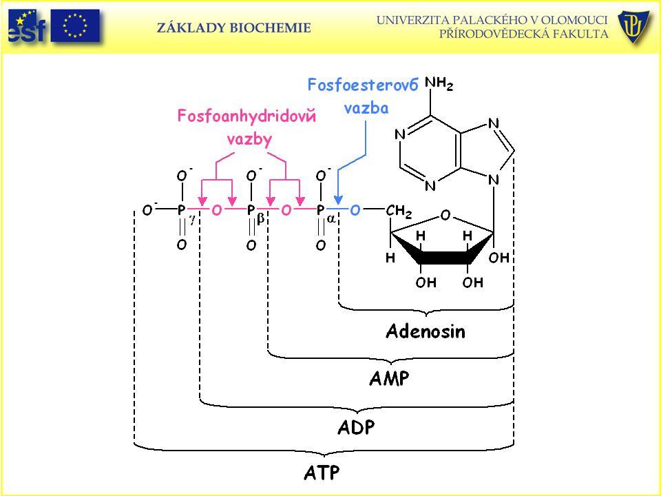 ATP - struktura