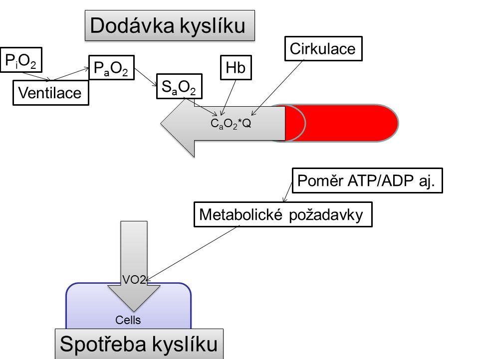 Dodávka kyslíku Spotřeba kyslíku Cirkulace PiO2 PaO2 Hb SaO2 Ventilace