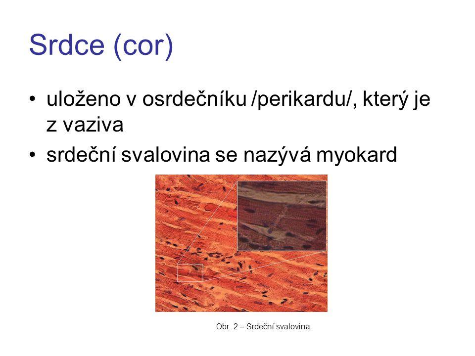 Srdce (cor) uloženo v osrdečníku /perikardu/, který je z vaziva