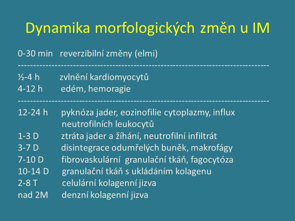 Dynamika morfologických změn u IM