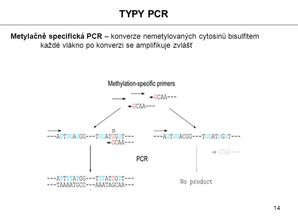 TYPY PCR Metylačně specifická PCR – konverze nemetylovaných cytosinů bisulfitem.