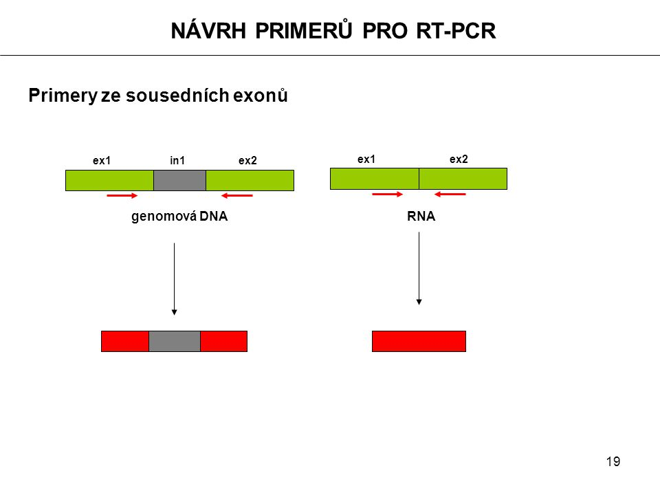 NÁVRH PRIMERŮ PRO RT-PCR