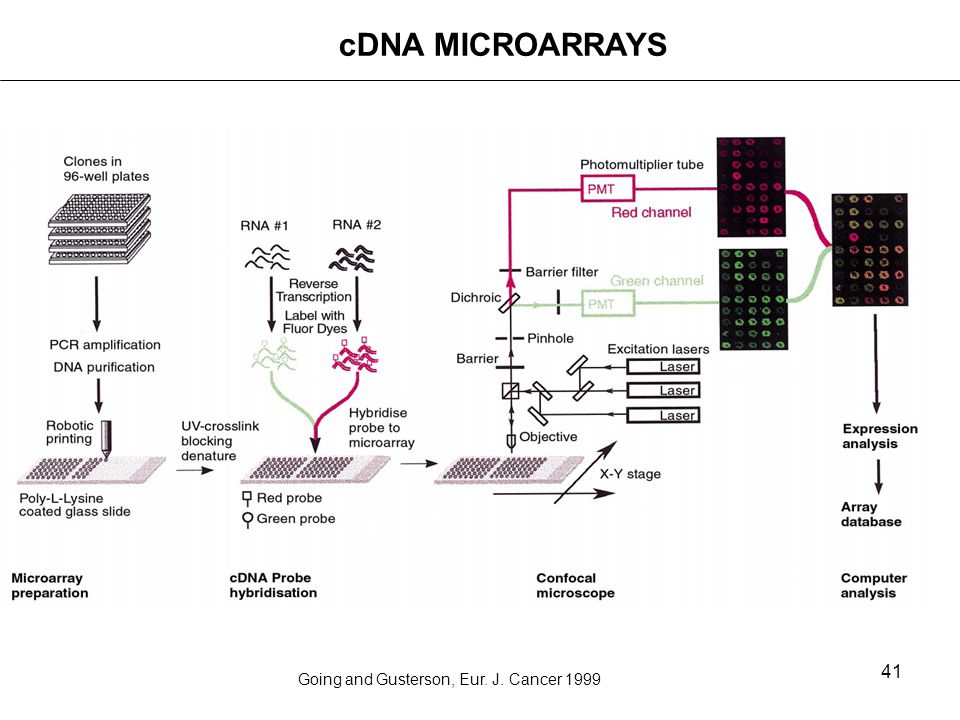 cDNA MICROARRAYS Going and Gusterson, Eur. J. Cancer 1999
