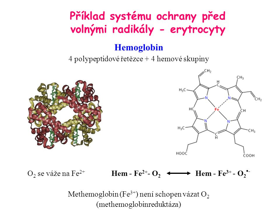 Příklad systému ochrany před volnými radikály - erytrocyty