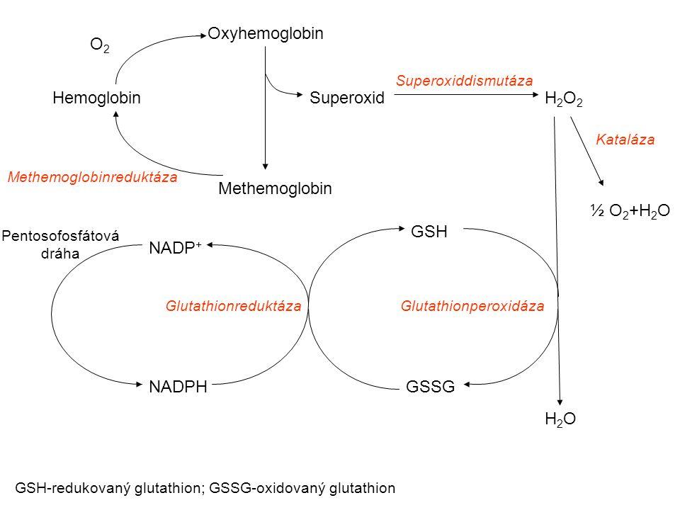 Oxyhemoglobin O2 Hemoglobin Superoxid H2O2 Methemoglobin ½ O2+H2O GSH