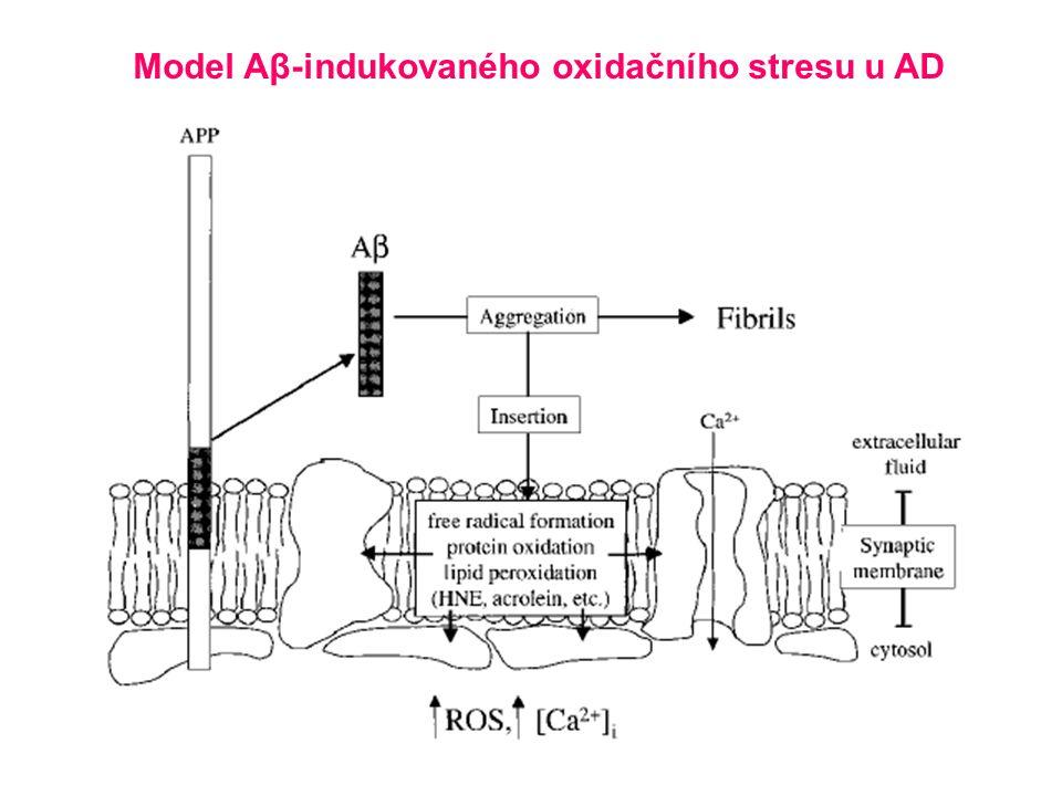 Model Aβ-indukovaného oxidačního stresu u AD