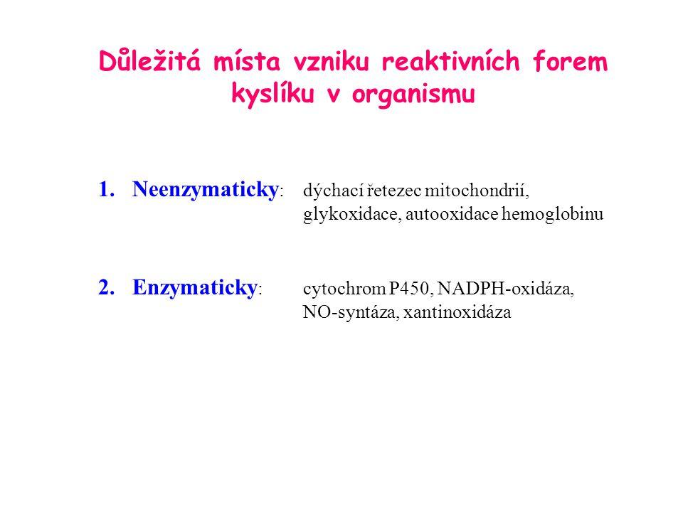 Důležitá místa vzniku reaktivních forem kyslíku v organismu
