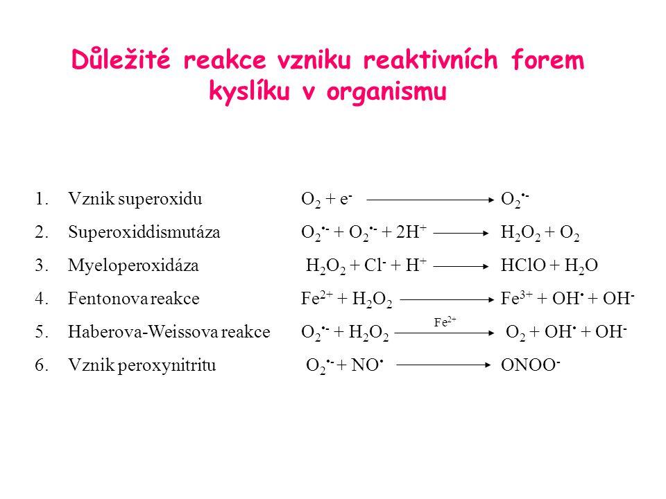 Důležité reakce vzniku reaktivních forem kyslíku v organismu