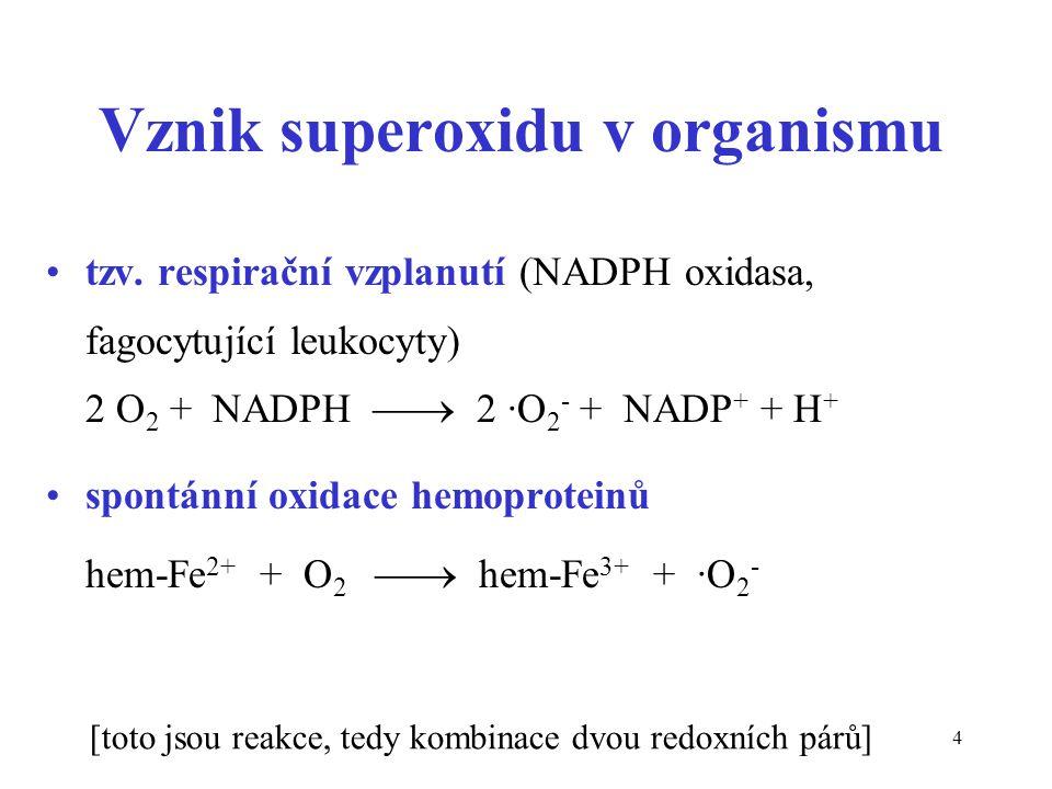 Vznik superoxidu v organismu