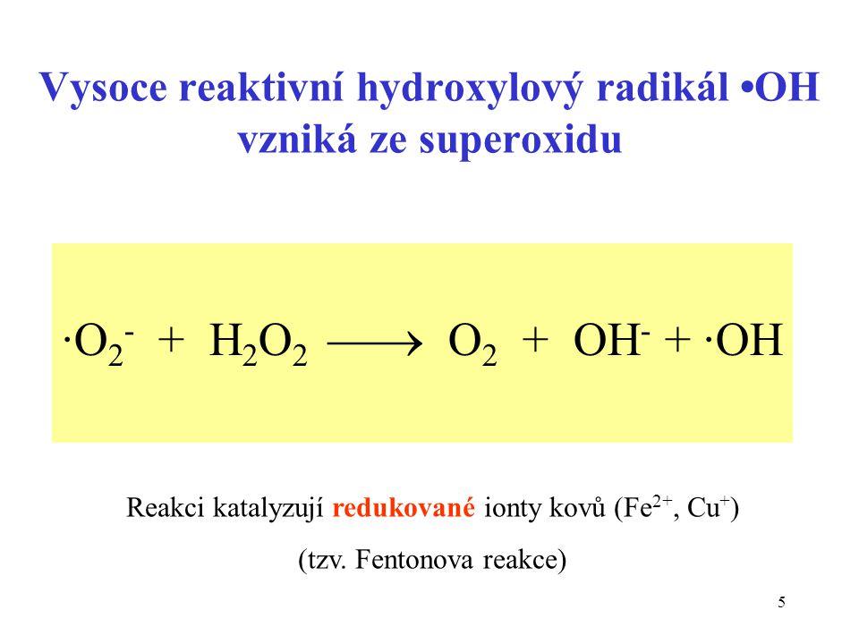 Vysoce reaktivní hydroxylový radikál •OH vzniká ze superoxidu