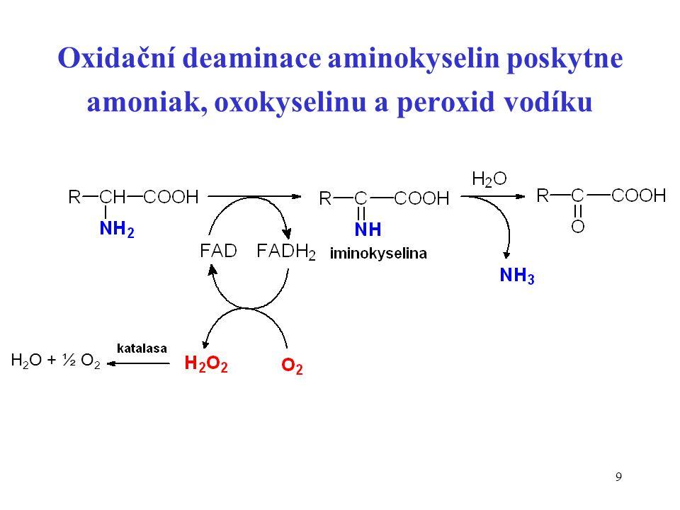 Oxidační deaminace aminokyselin poskytne amoniak, oxokyselinu a peroxid vodíku