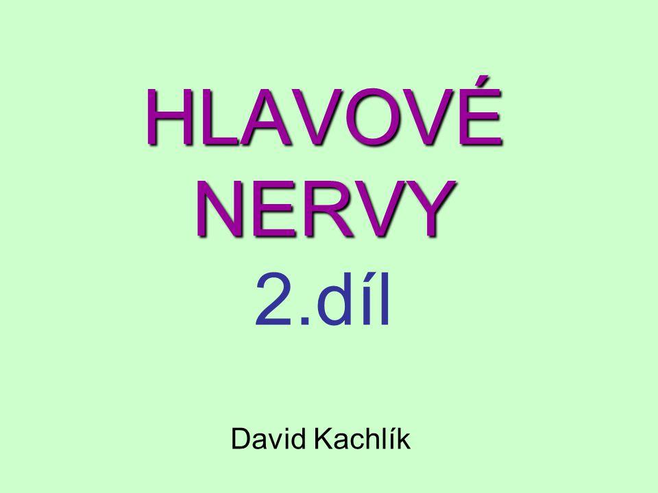 HLAVOVÉ NERVY 2.díl David Kachlík