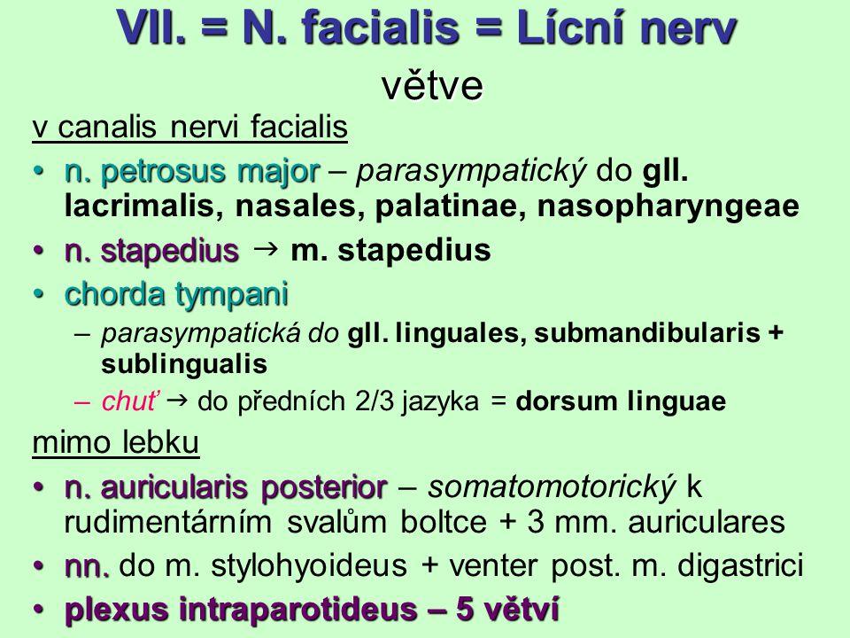VII. = N. facialis = Lícní nerv větve