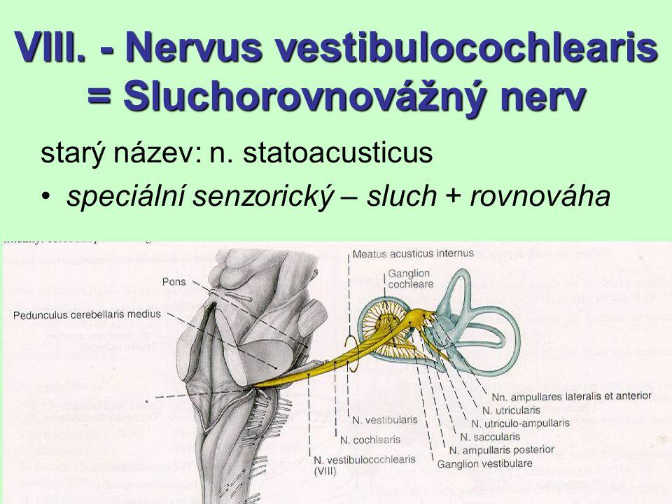 VIII. - Nervus vestibulocochlearis = Sluchorovnovážný nerv