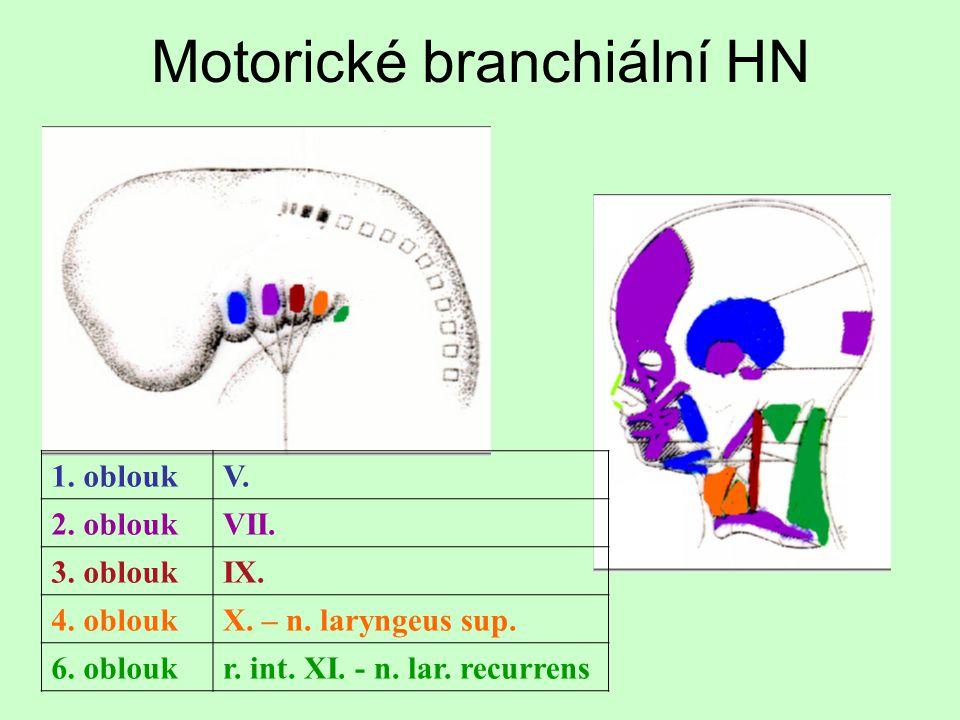 Motorické branchiální HN