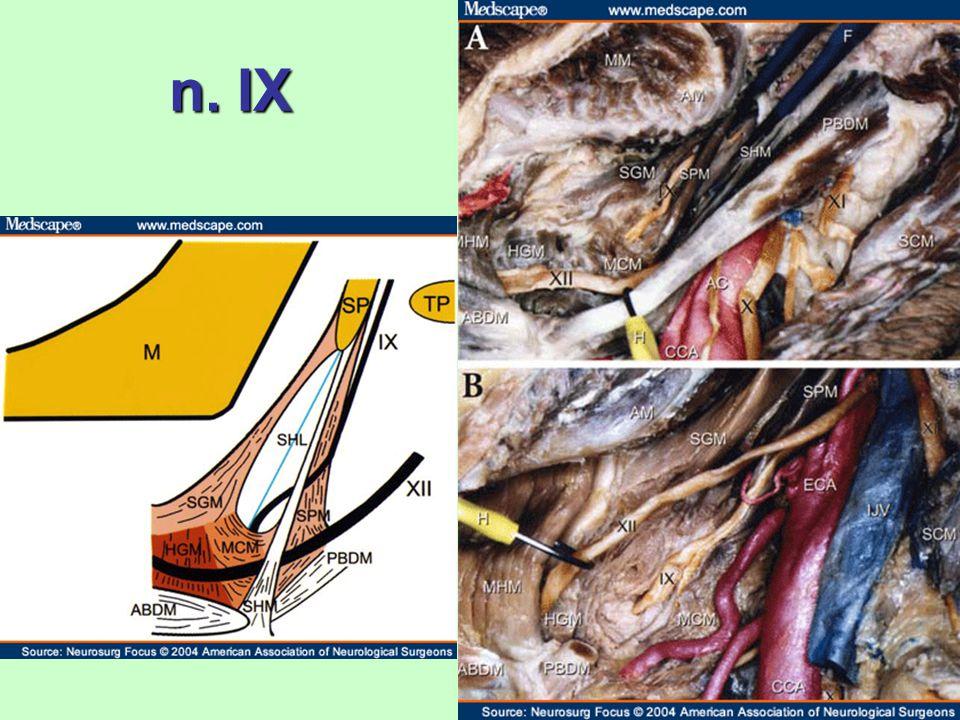 n. IX