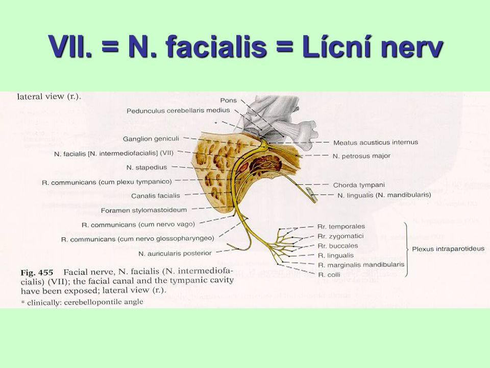 VII. = N. facialis = Lícní nerv