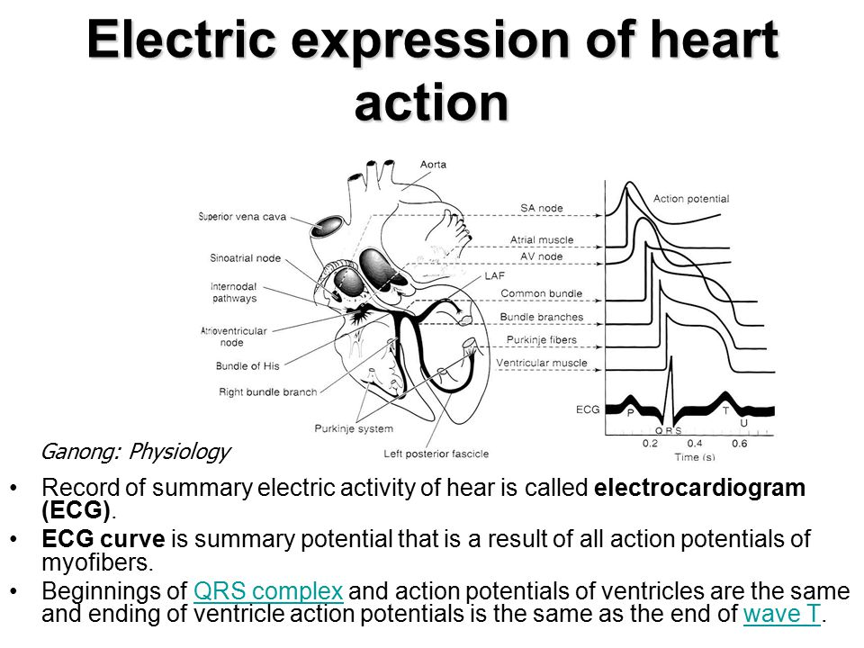 Electric expression of heart action
