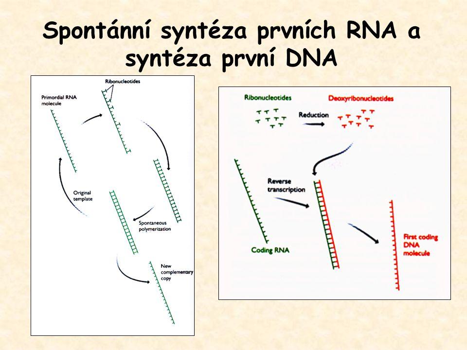 Spontánní syntéza prvních RNA a syntéza první DNA