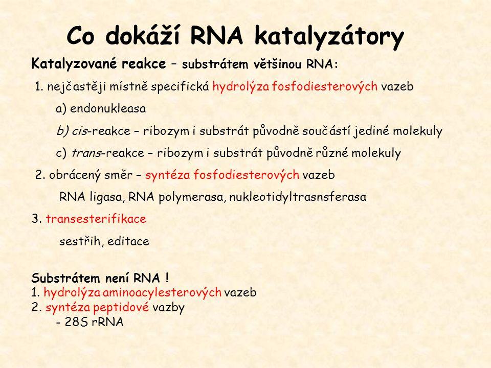 Co dokáží RNA katalyzátory