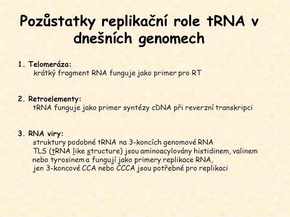 Pozůstatky replikační role tRNA v dnešních genomech