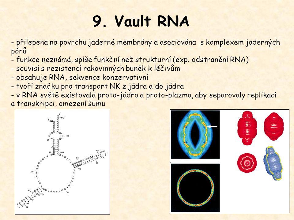 9. Vault RNA - přilepena na povrchu jaderné membrány a asociována s komplexem jaderných pórů.