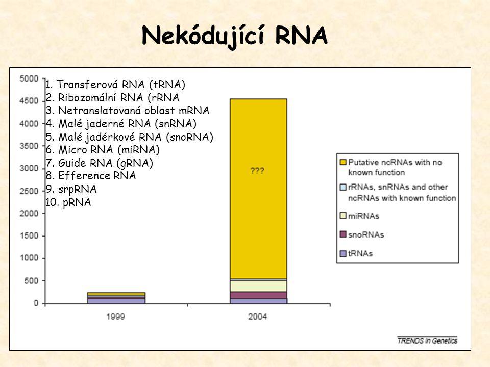 Nekódující RNA 1. Transferová RNA (tRNA) 2. Ribozomální RNA (rRNA