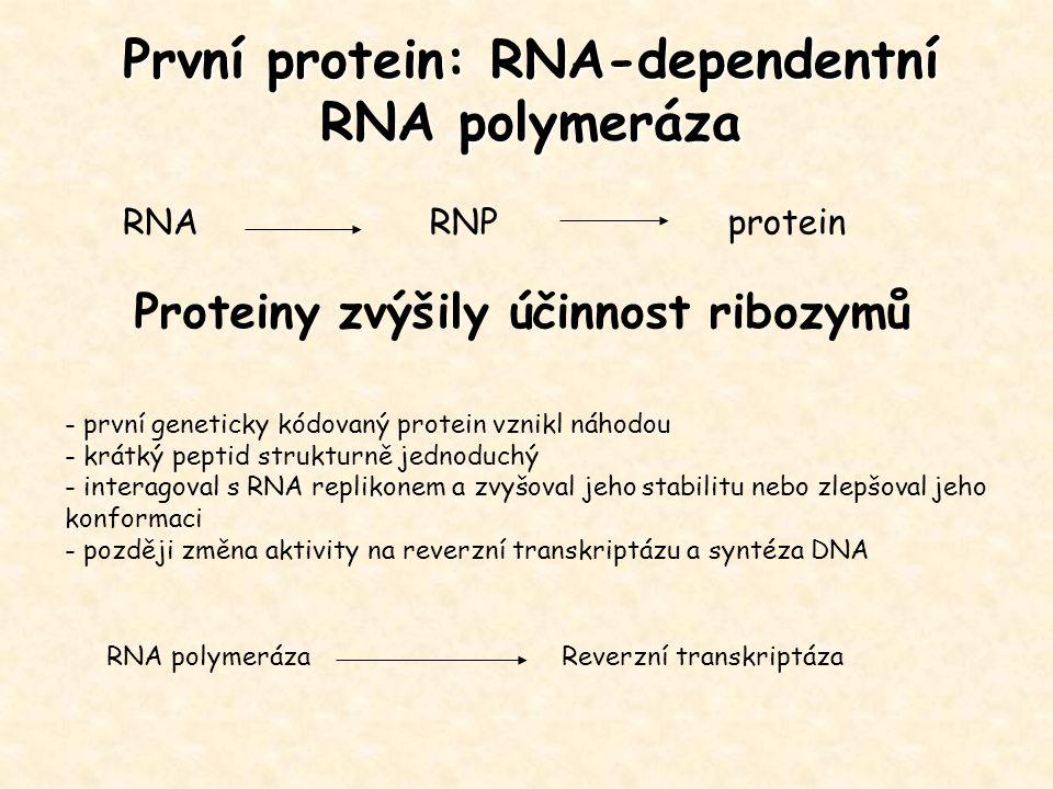 První protein: RNA-dependentní RNA polymeráza