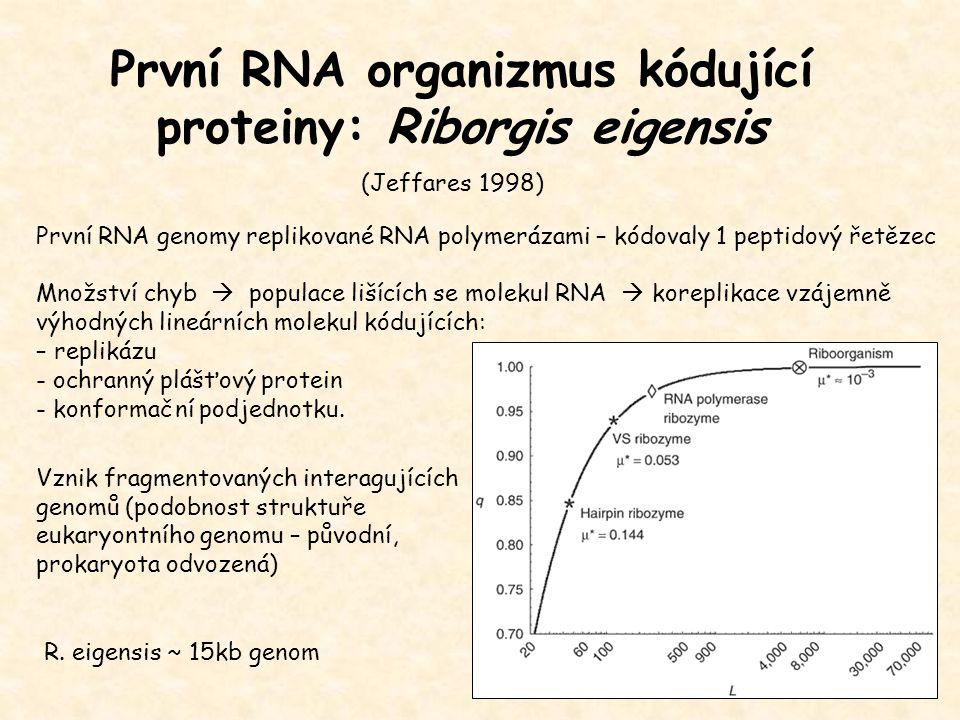 První RNA organizmus kódující proteiny: Riborgis eigensis