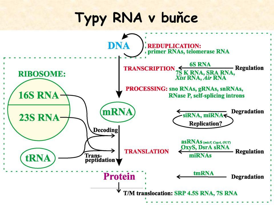 Typy RNA v buňce