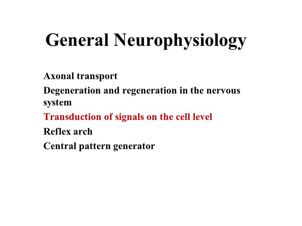 General Neurophysiology