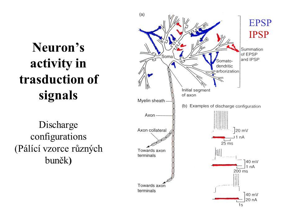 Neuron's activity in trasduction of signals Discharge configurations (Pálící vzorce různých buněk)