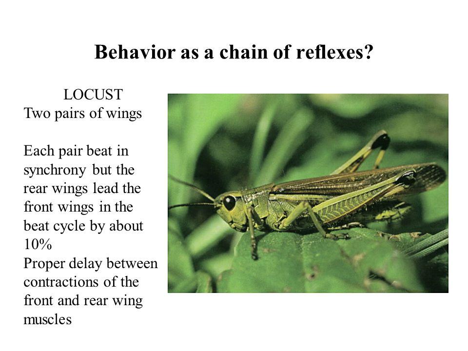 Behavior as a chain of reflexes