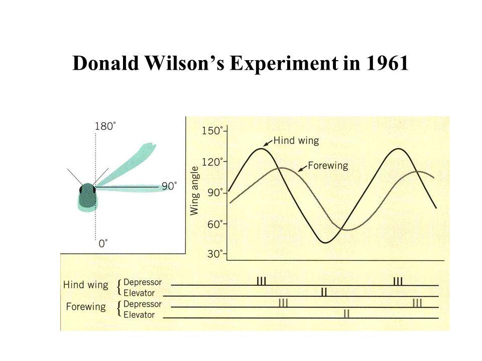 Donald Wilson's Experiment in 1961